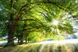 Lichtbaum - Baum mit Sonnenstrahlen