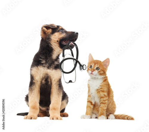 Keuken foto achterwand Kat puppy vet and cat and stethoscope