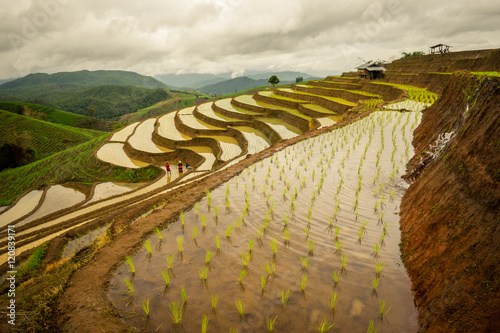 Garden Poster Rice fields rice terraces In the rural mountain