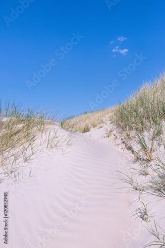 Fototapeten Nordsee Dünen an der Nordsee im Sommer
