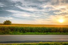 Cornfield In The Summer Landscape With Road