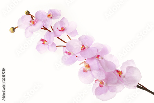 Recess Fitting Orchid Pink cherry blossom branch