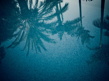 Palm Trees Reflections On Swimming Pool