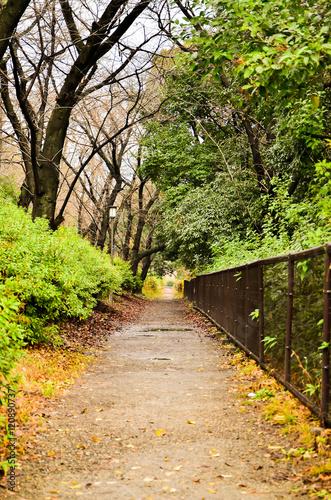 Foto auf Leinwand Garten Walk way inside public park in Japan