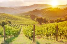 Beautiful Vineyard Among Hills On Sunset