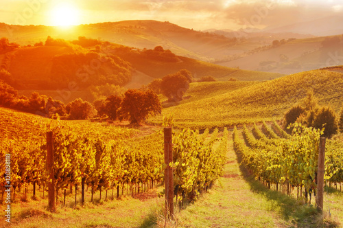 Deurstickers Oranje eclat Vineyard among Hills on sunset