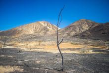 Tall Skinny Burned Tree