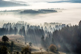 poranna mgła i las - 120902524
