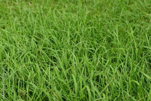 Montage in der Fensternische Gras Green grass