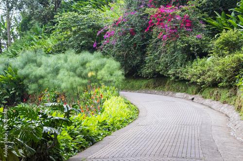 tropical garden in Costa Rica