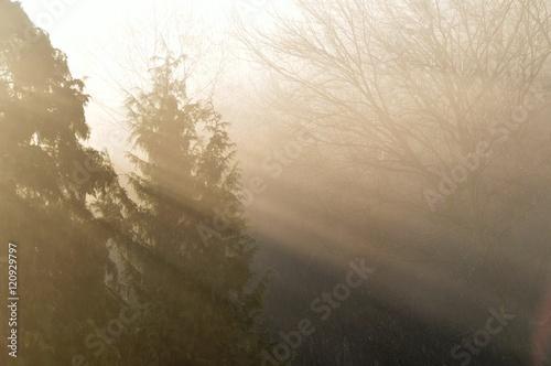 Papiers peints Foret brouillard Sonnenstrahlen am Herbstmorgen