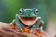 Laugh Frog