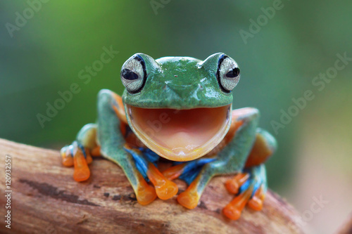 Foto op Canvas Macrofotografie Laugh Frog