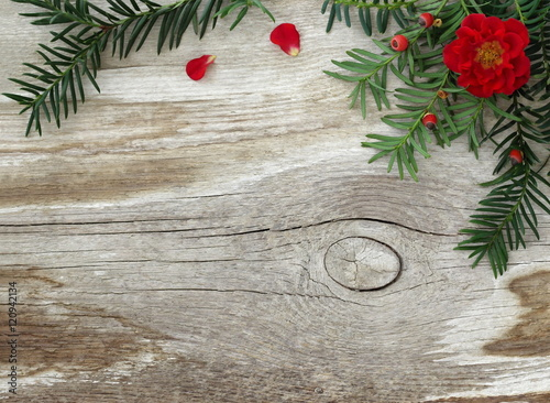 Natural Rustic Fall Or Winter Background With Branch Of Yew Tree Red Roses And Old Wooden Board Decorative Frame Border Green Needles