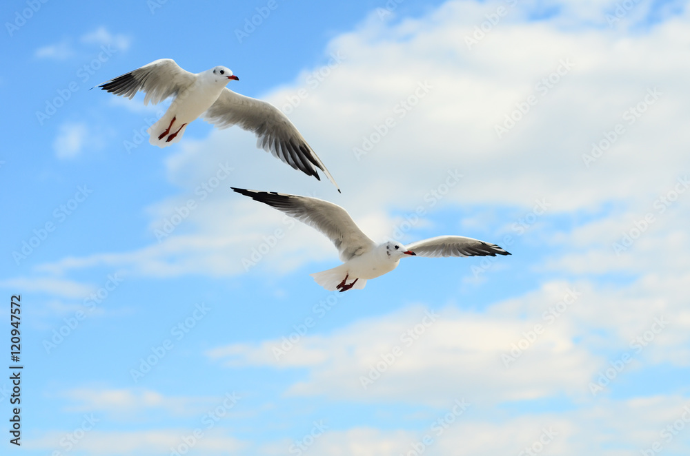 Two Seagulls in the blue sky.