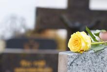 Friedhof, Allerheiligen, Allerseelen, Rose Auf Grabstein, Textraum, Copy Space