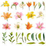 Vintage Lily and Rose Flowers Set - Watercolor Style - in vector