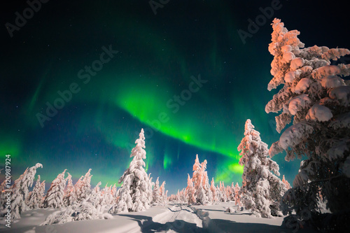 Poster Aurore polaire Winter night landscape with forest, road and polar light over the trees.
