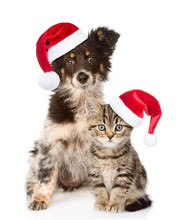 Dog And Scottish Kitten With Red Christmas Hats Looking At Camera. Isolated On White