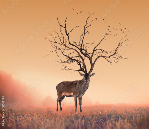 Tuinposter Bestsellers Conceptual Deer stag , a dry tree as red deer stag