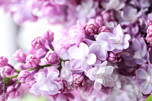 Keuken foto achterwand Lilac Blooming purple lilac flowers background, close up