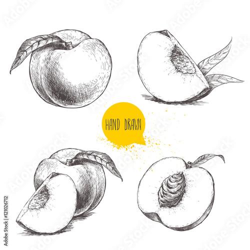 Obraz na płótnie Hand drawn sketch style peach fruit set