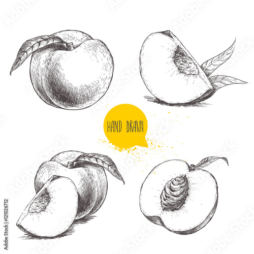 Foto Hand drawn sketch style peach fruit set