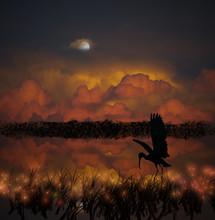 Blue Heron Hunting At Night