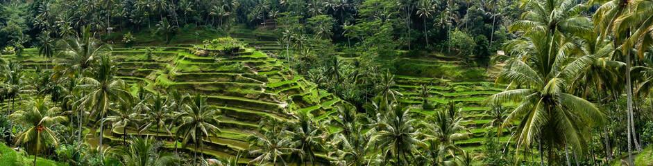 Rizières en terrasse de Tegalalang, Bali, Indonésie