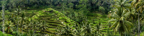 Fotobehang Rijstvelden Rizières en terrasse de Tegalalang, Bali, Indonésie