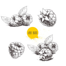 Hand Drawn Raspberry Set Isolated On White Background. Retro Sketch Style Vector Eco Food Illustration