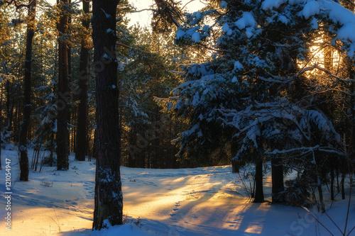 Foto op Plexiglas Aubergine Winter in Poland
