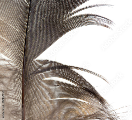 beautiful feather on white background