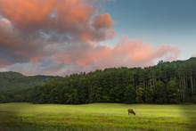 Elk Grazing At Sunrise