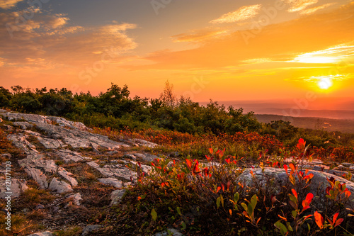 Obraz Blueberry bushes turn a beautiful vivid red in early autumn as the sun sets at the top of High Point State Park, New Jersey - fototapety do salonu