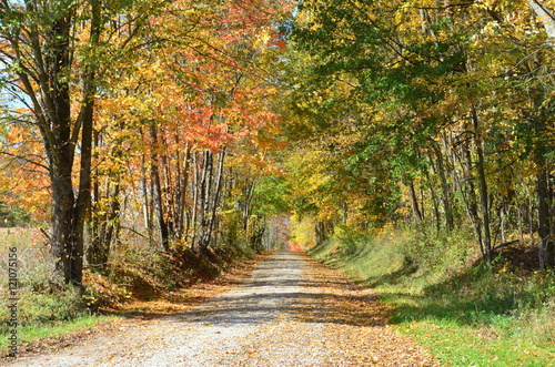 Fotografie, Obraz  Country road on an Autumn day