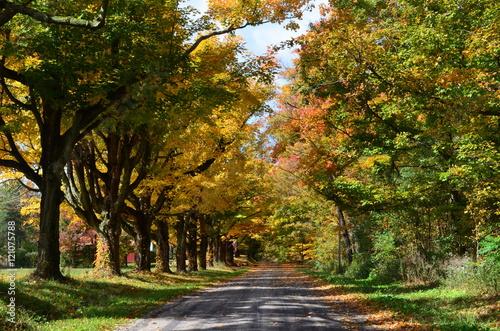 Plakat Rząd kolorowi drzewa wzdłuż wiejskiej drogi na jesień dniu