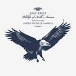 Белоголовый орлан, животный мир Северной Америки, иллюстрация, вектор