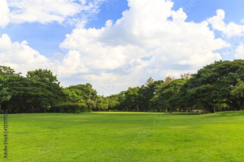 Foto op Plexiglas Landschappen Green trees in beautiful park