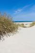 Leinwandbild Motiv Strandhafer und Dünengras im Sommer