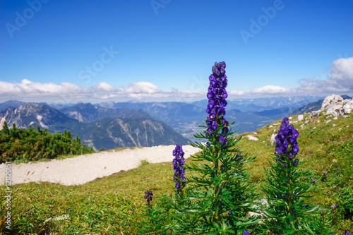 Aconitum napellus flowers against mountains Wallpaper Mural