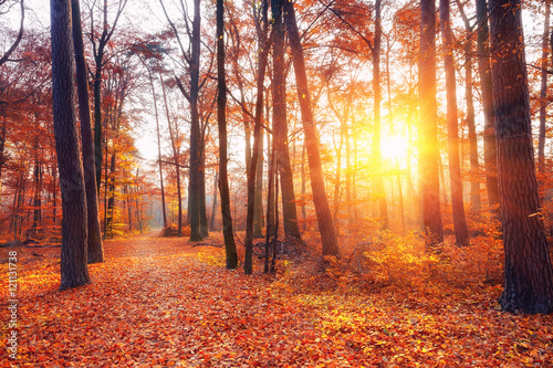 Spoed Foto op Canvas Koraal Vibrant sunset in the autumn forest