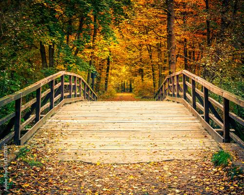 In de dag Bruggen Wooden bridge in the autumn forest