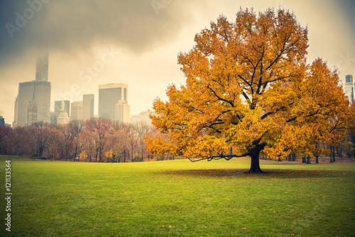 Photo Central park at rainy day, New York City, USA