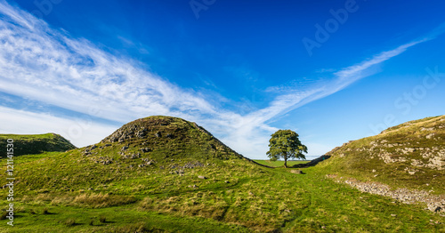 The iconic Sycamore Gap on Hadrian's Wall, Northumberland, England Canvas Print
