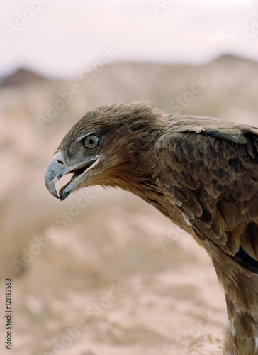 Foto op Canvas Vogel Bird of prey with its beak open.