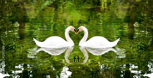 Poster Cygne Два лебедя на озере окруженные деревьями.