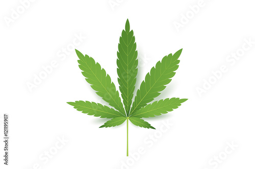 Realistic Marijuana leaf icon Canvas Print