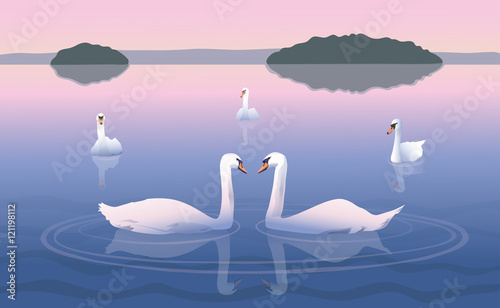 Fotografie, Obraz Swimming swans/Group of swans on the lake