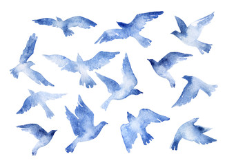 FototapetaAbstract flying bird set with watercolor texture isolated on white background.